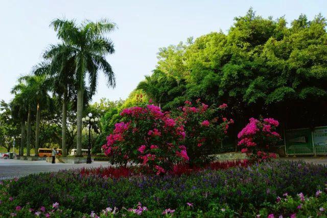 深圳红树林公园门票_红树林位于深圳湾北东岸深圳河口,和大梅沙,小梅沙不同的是,红树林