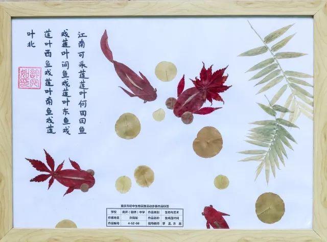标本模型显艺术创意,实践活动展生物魅力——我校在重庆市初中生物图片