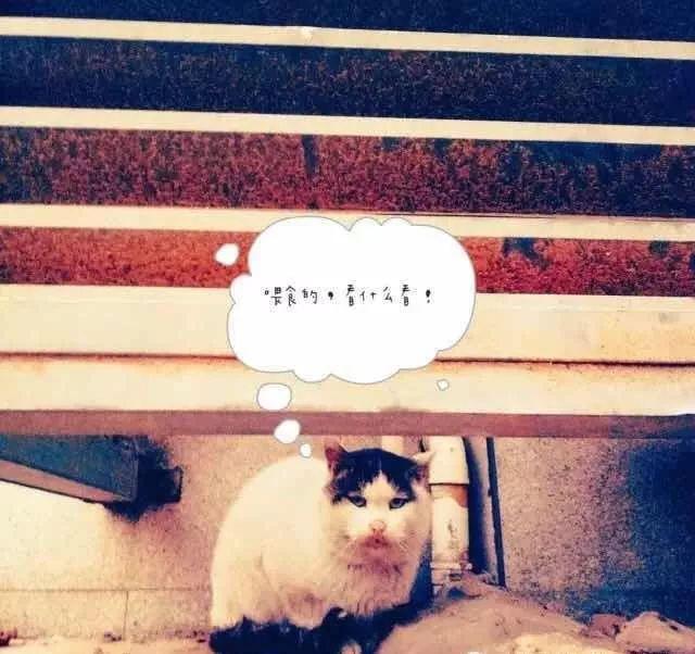 刘亦菲家后院养40多只猫,各大明星们都养了什么宠物?