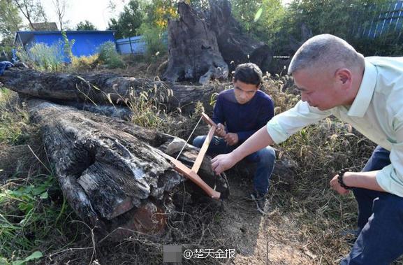存放五年烂木头竟是明代金丝楠 估价2000万