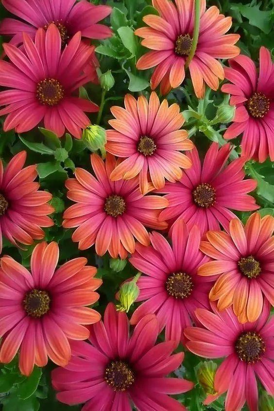 最美的花 !最好的祝福!送给你!