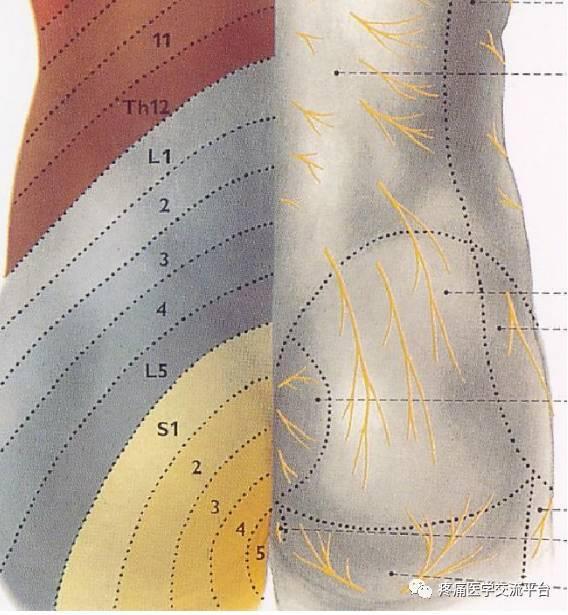 拭腰骶部在那个位置�_(针刀篇)腰骶部针刀治疗