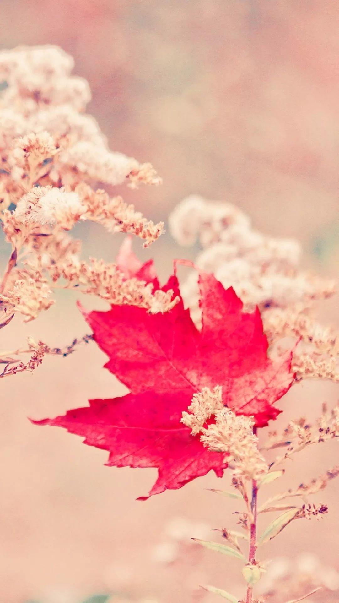 风中的落叶图片