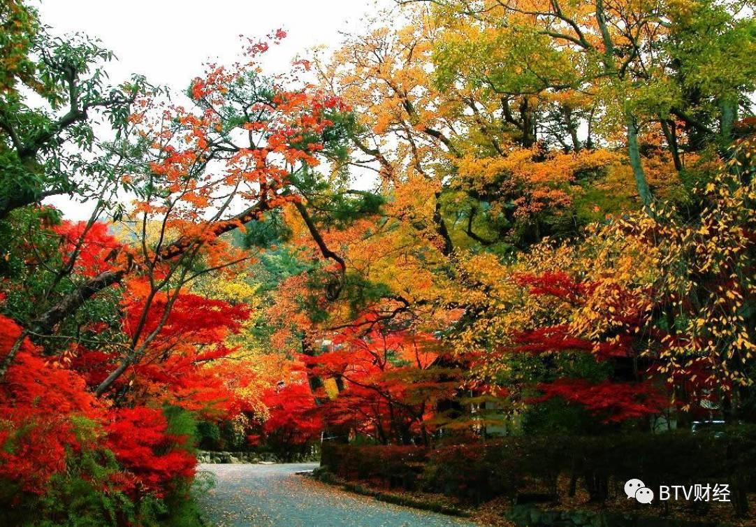 """出来后右转,有个上山的路,上面有标牌""""北宫国家森林公园"""" 妙峰山赏叶图片"""