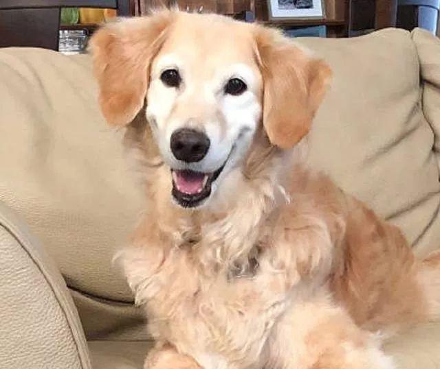 狗狗:谢谢你没有放弃我!