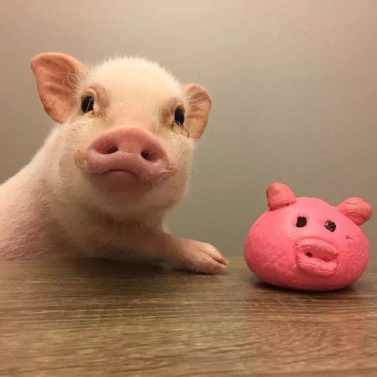了_隔壁同事终于开口问了我:到底什么是猪猪女孩?