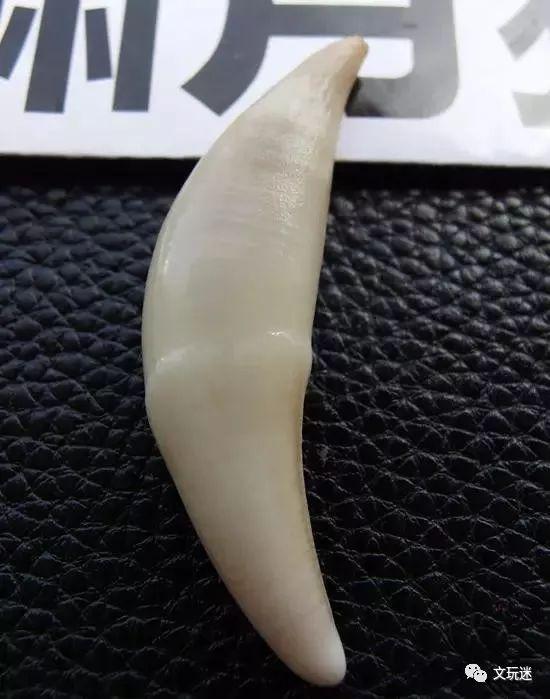 狼牙与狗牙的区别,一般人还真不知道