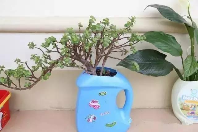 洗衣液的瓶子做的花盆,还是很有感觉的!图片
