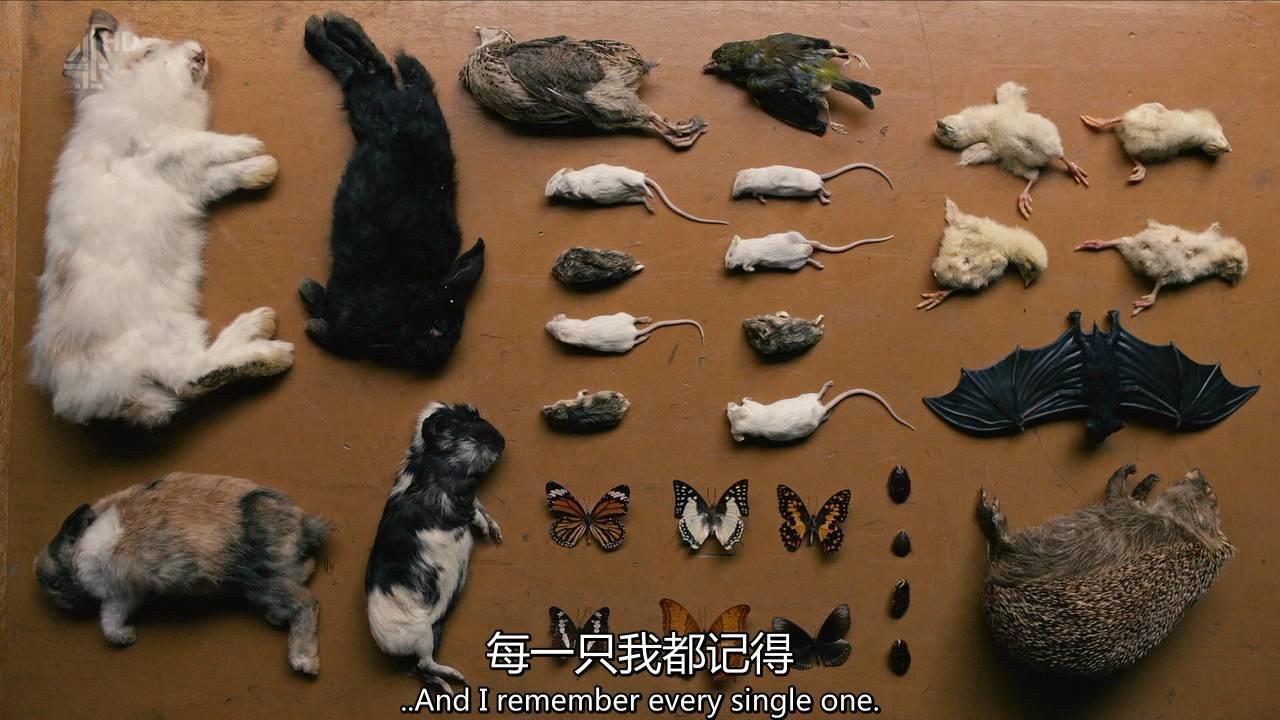 詹姆斯的虐杀记录,变态杀手童年时通常都有虐待小动物的经历