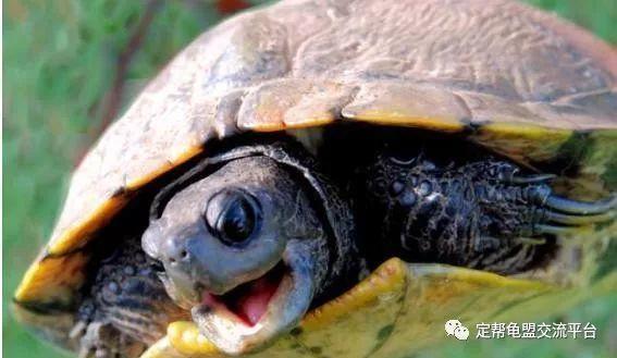 乌龟结束冬眠,千万不要立马喂食 5招让你的乌龟快速活过来