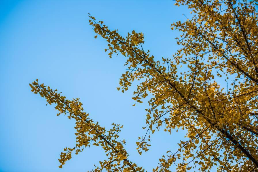 时间都还来得及 拥抱来得及 这一刻的秋,如素静温婉的女子