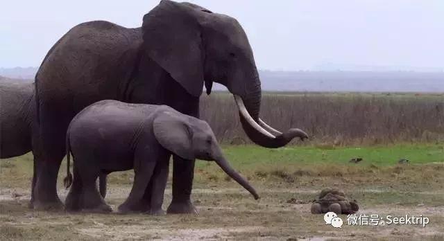 黄晓明baby带儿子去动物园遭围观!人气好高!