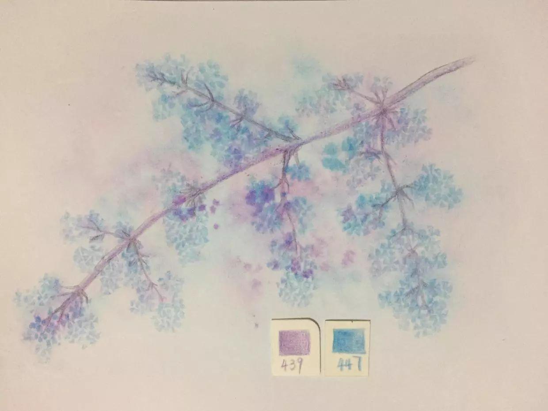简单彩铅花朵教程图解-简单彩铅画小清新画|彩铅手绘