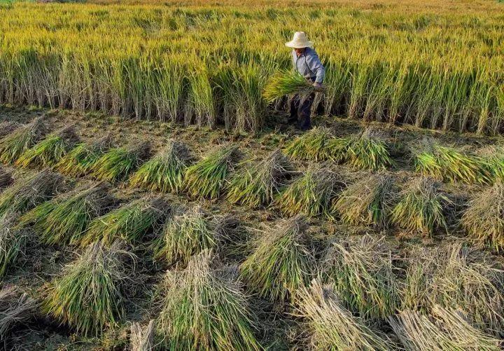 宁夏农洽会上捧回11个金奖 金奖数量和获奖产品比例均居全国第一