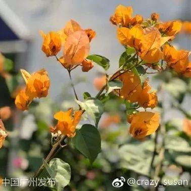 三星深圳工厂整体裁撤,300余人遣散费超2000万元