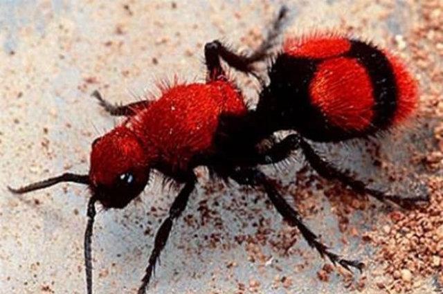 梦见许多红色的蚂蚁