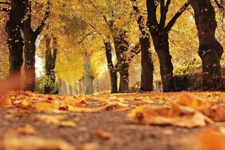 别只顾着双十一啦,11月的杭州还有这些活动/美景/演出图片