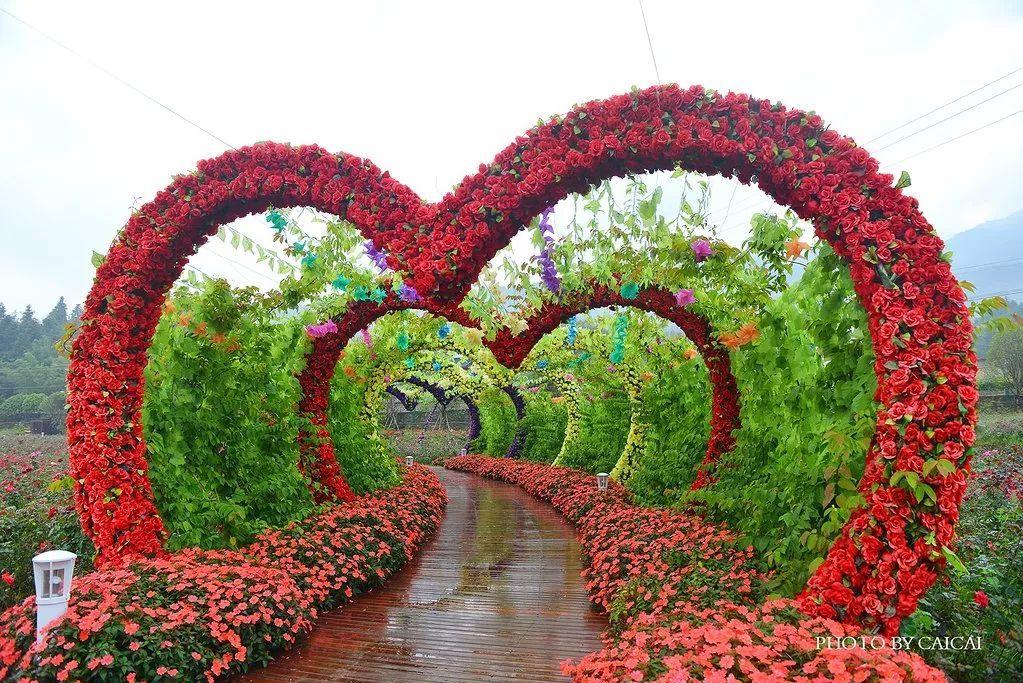 壁纸 花 花墙 景观 墙 植物 桌面 1023_683