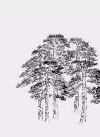 基础教程:松树的画法