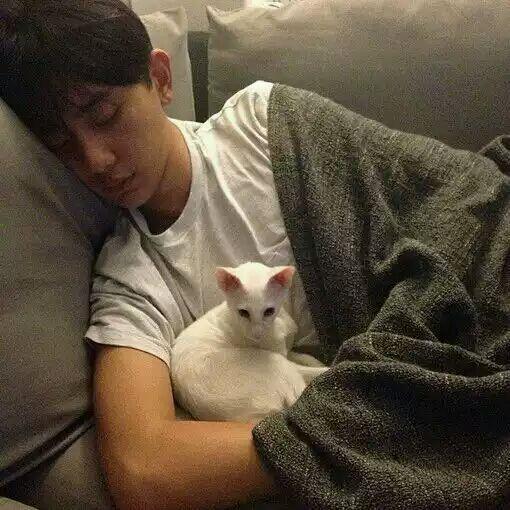 一个喜欢猫的男人_男人,更懂得承诺的重量,一起陪你咫尺天涯,因为养猫要养一辈子,爱你也
