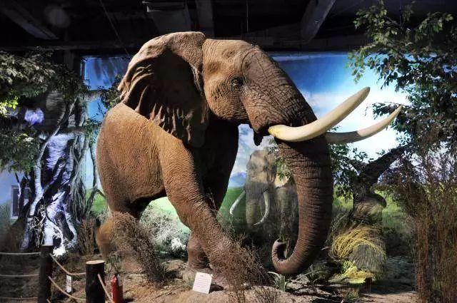 """""""全""""是动物标本种类齐全,来源遍及非洲,南美洲,北美洲,欧洲,亚洲和"""