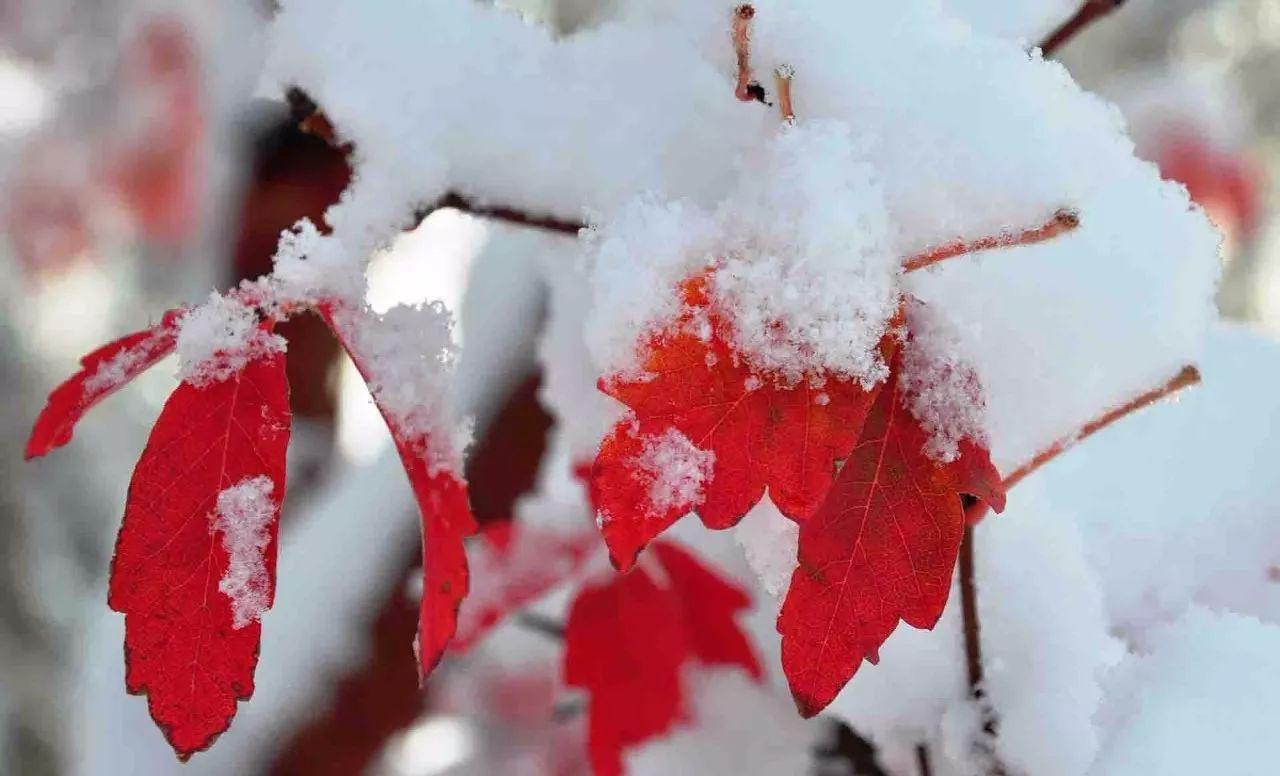 立冬节气图片大全