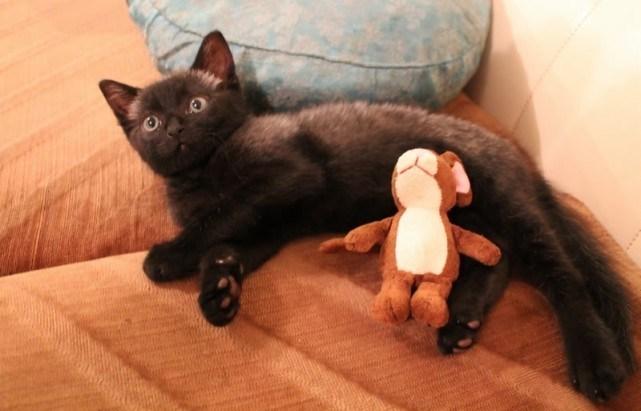 Картинки по запросу Кошка