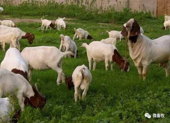 母羊产舍设计图