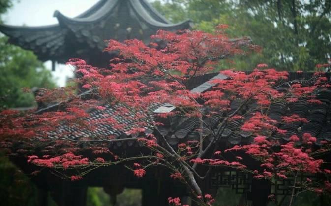 旺季45元,淡季30元 鼋头渚的风光是山清水秀,浑然天成,为太湖风景的