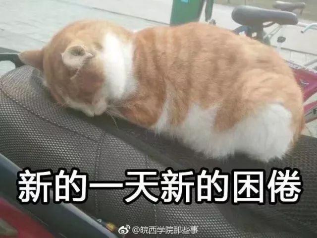 撸撸摄影院_皖院流浪猫合集,你撸过哪一只?