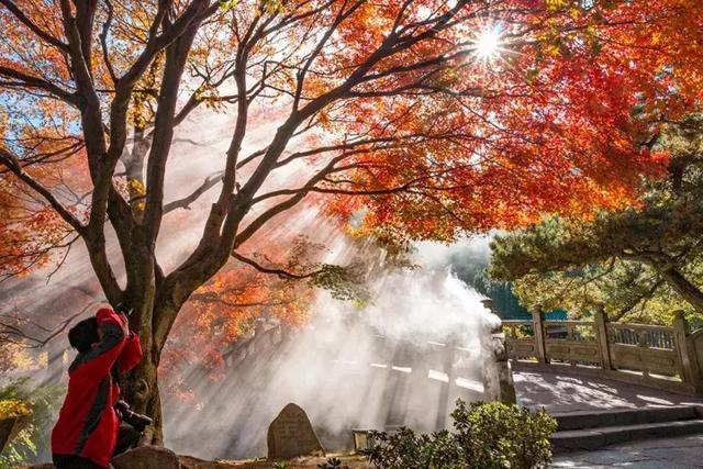 江西风景独好|秋天一到了,九江永修云居山就是一片霜叶绯红!