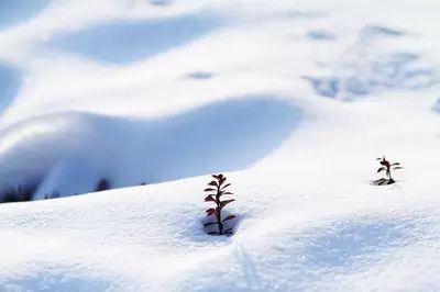描写冬天的好词好句