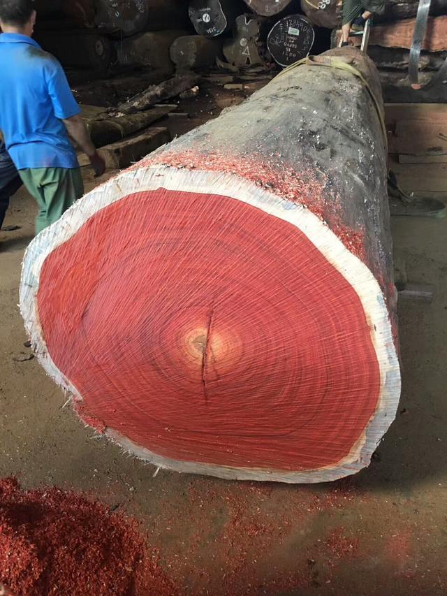非洲红花梨实木大板,拥有最完美中国红的木头