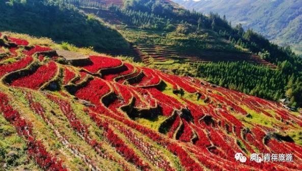 在金黄的秋天,没想到龙胜泗水隐藏了一处绝美的风景,红色的梯田与田埂