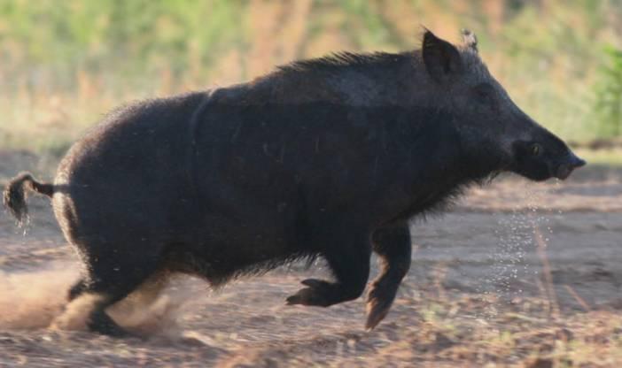 庄河老两口遭野猪疯狂攻击,更让人想不到的是 新闻日志