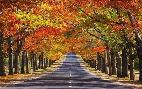 重庆这条秒杀加拿大枫叶林的道路 一边是春天,一边是图片