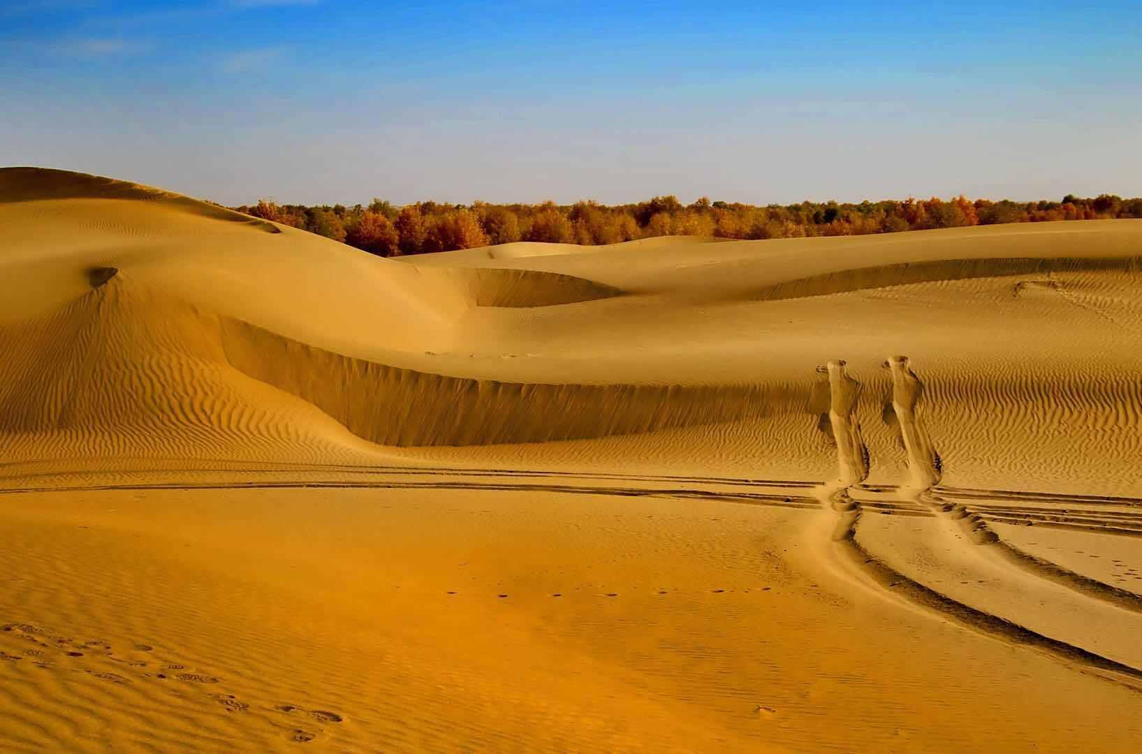 塔克拉玛干沙漠的探索之旅