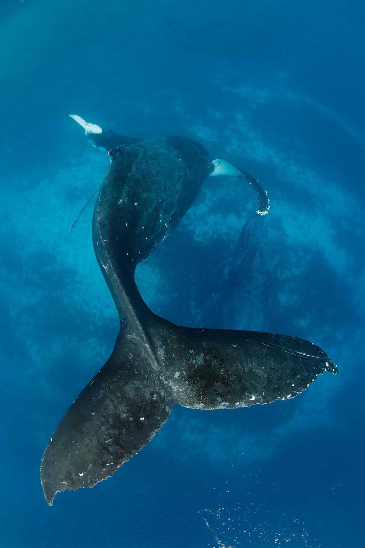他在深海与鲸共舞 曾听见蓝鲸的呼吸声