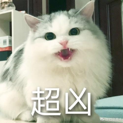 壁纸 动物 猫 猫咪 小猫 桌面 500_500图片