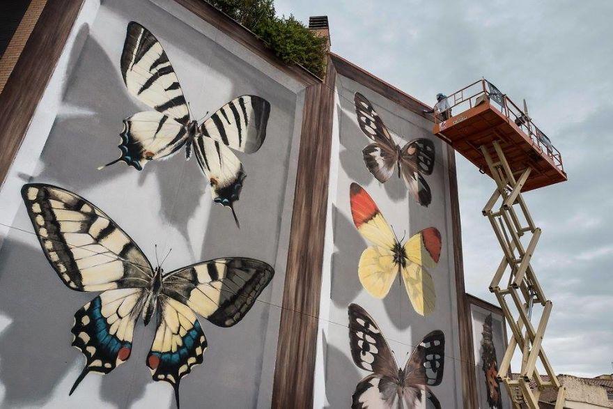 蝴蝶游街 是末日的来临还是幸运的降临图片