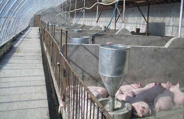 梦见猪圈墙倒了