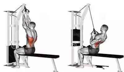 原来职业健美运动员都是这样训练背部肌肉的,怪不得能