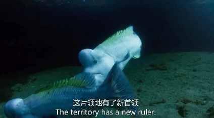 明明只是条鱼,它却演出了武则天的剧情
