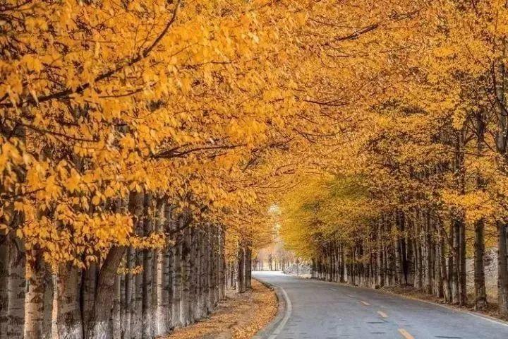 如果说走就走,你还能赶上新都桥的秋