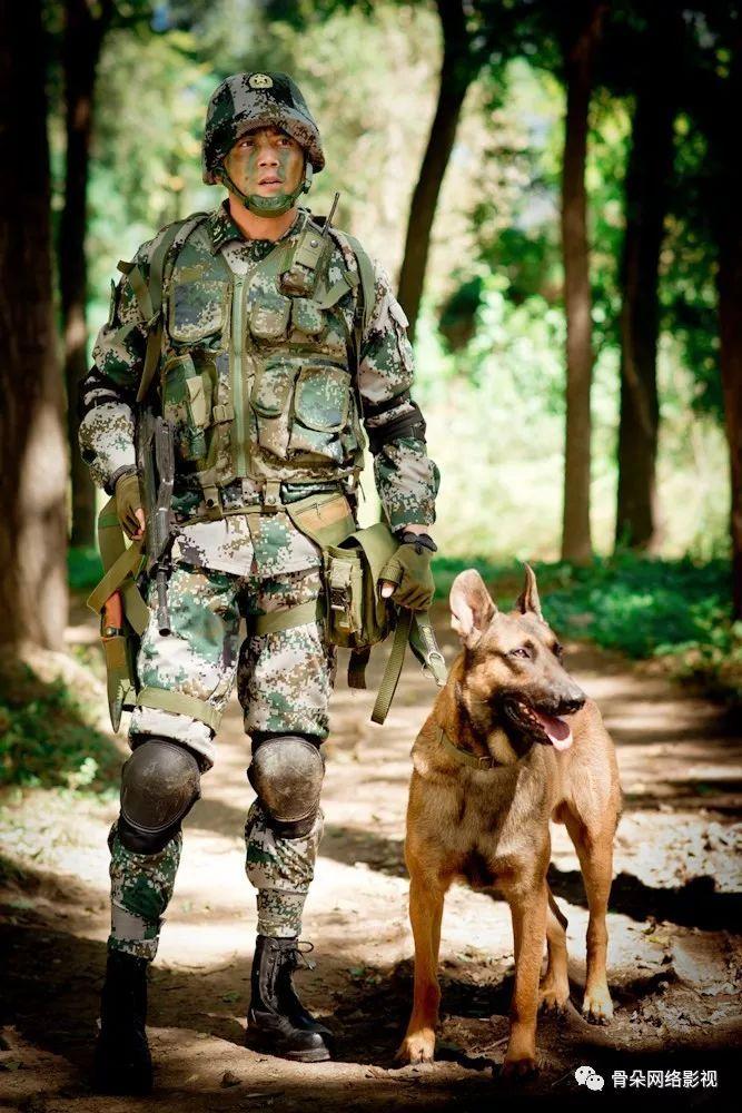军犬奇兵_没有全明星阵容和选秀的台综如何突围,《奇兵神犬》的