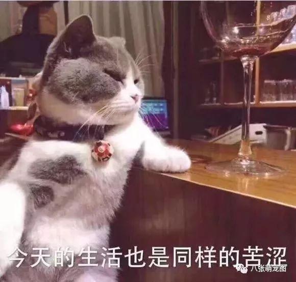 可爱小猫表情包图片