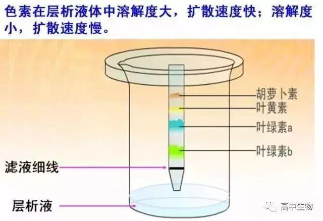 色素的原理_激光治疗色素病变原理
