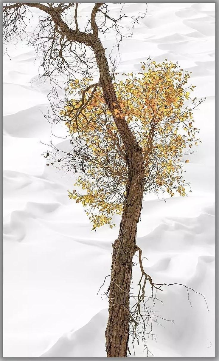 最美的树—— 胡杨