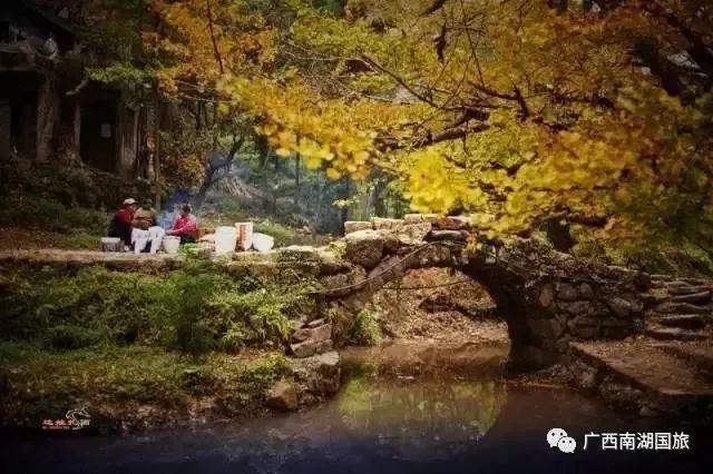 赏贵州妥乐醉美银杏季,兴义马岭河,万峰林,万峰湖专列纯玩双卧四日