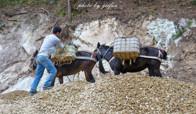 武汉木兰天池赶骡人,一道流动的风景线